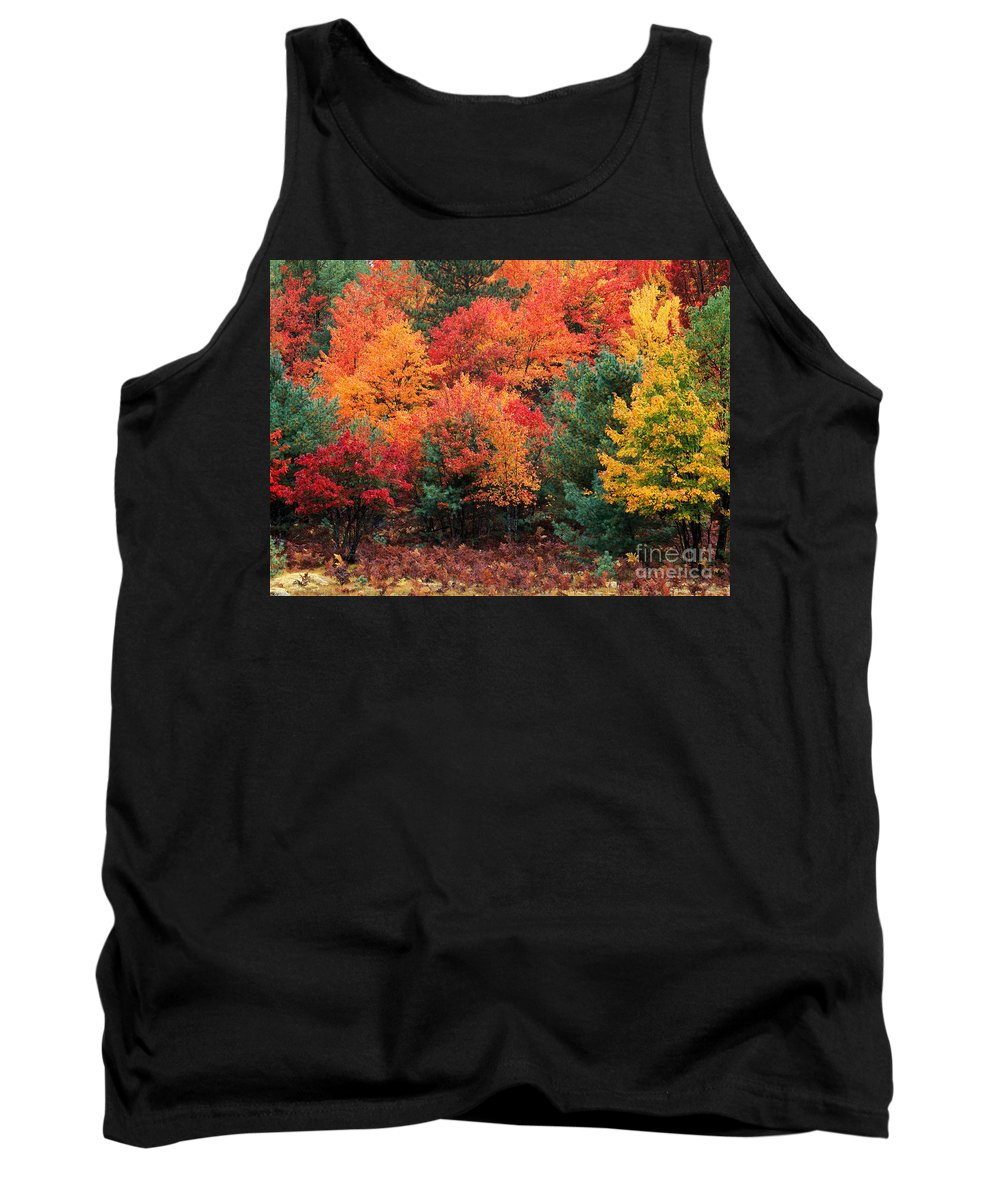 Landscape Tank Top featuring the photograph Autumn Maple Trees by Rod Planck