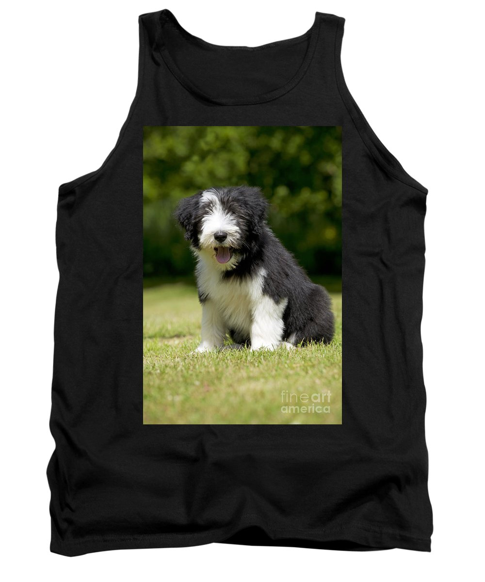 Bearded Collie Tank Top featuring the photograph Bearded Collie Puppy by John Daniels