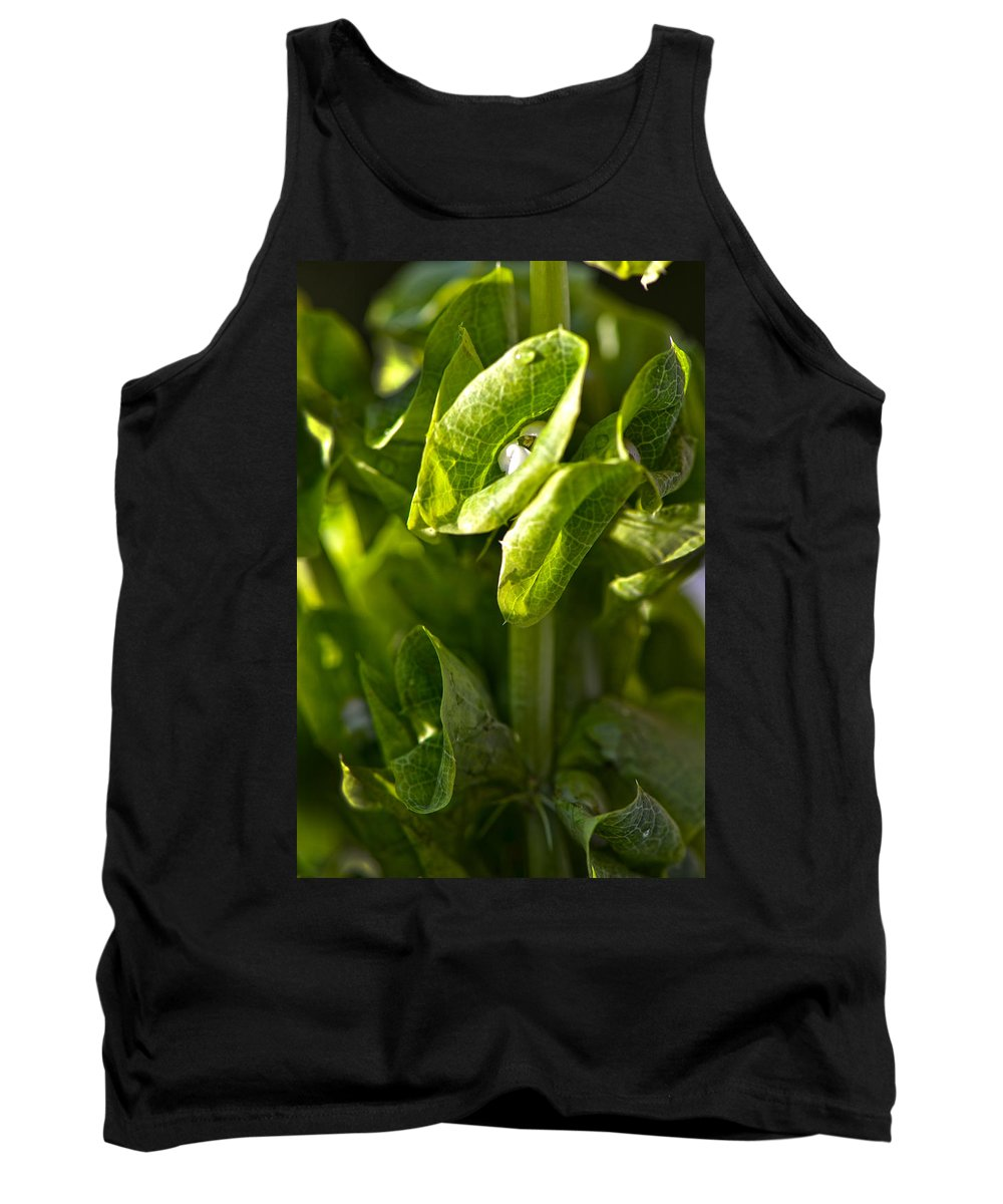 Flowers Tank Top featuring the photograph Bells Of Ireland Plant by Sandi OReilly