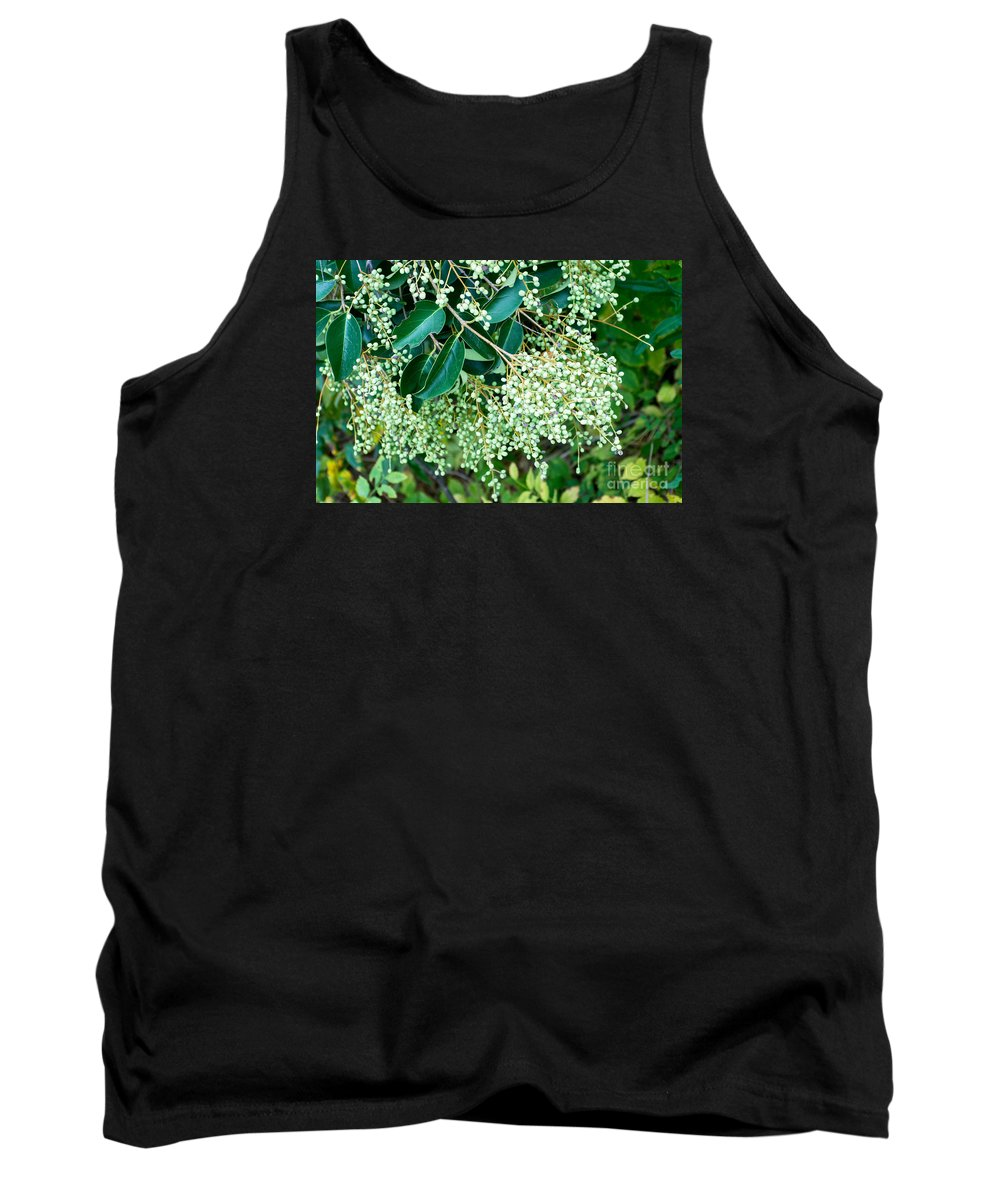Tiny Tank Top featuring the photograph Berries On A Bush by Imagery by Charly