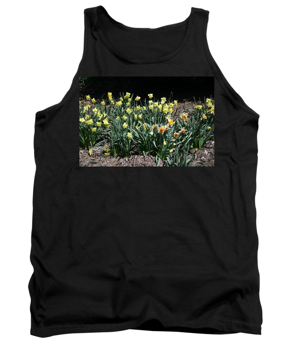 Daffodils Tank Top featuring the photograph Biltmore Daffodils by Cody Cookston