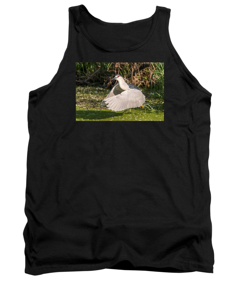 Black-crowned Tank Top featuring the photograph Black-crowned Night Heron by Patti Deters