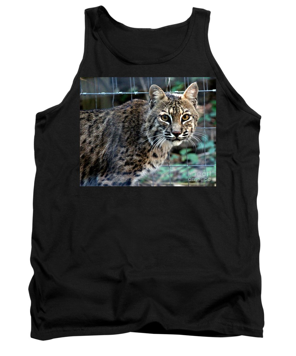 Bobcat Tank Top featuring the photograph Bobcat Beauty by Kathy White