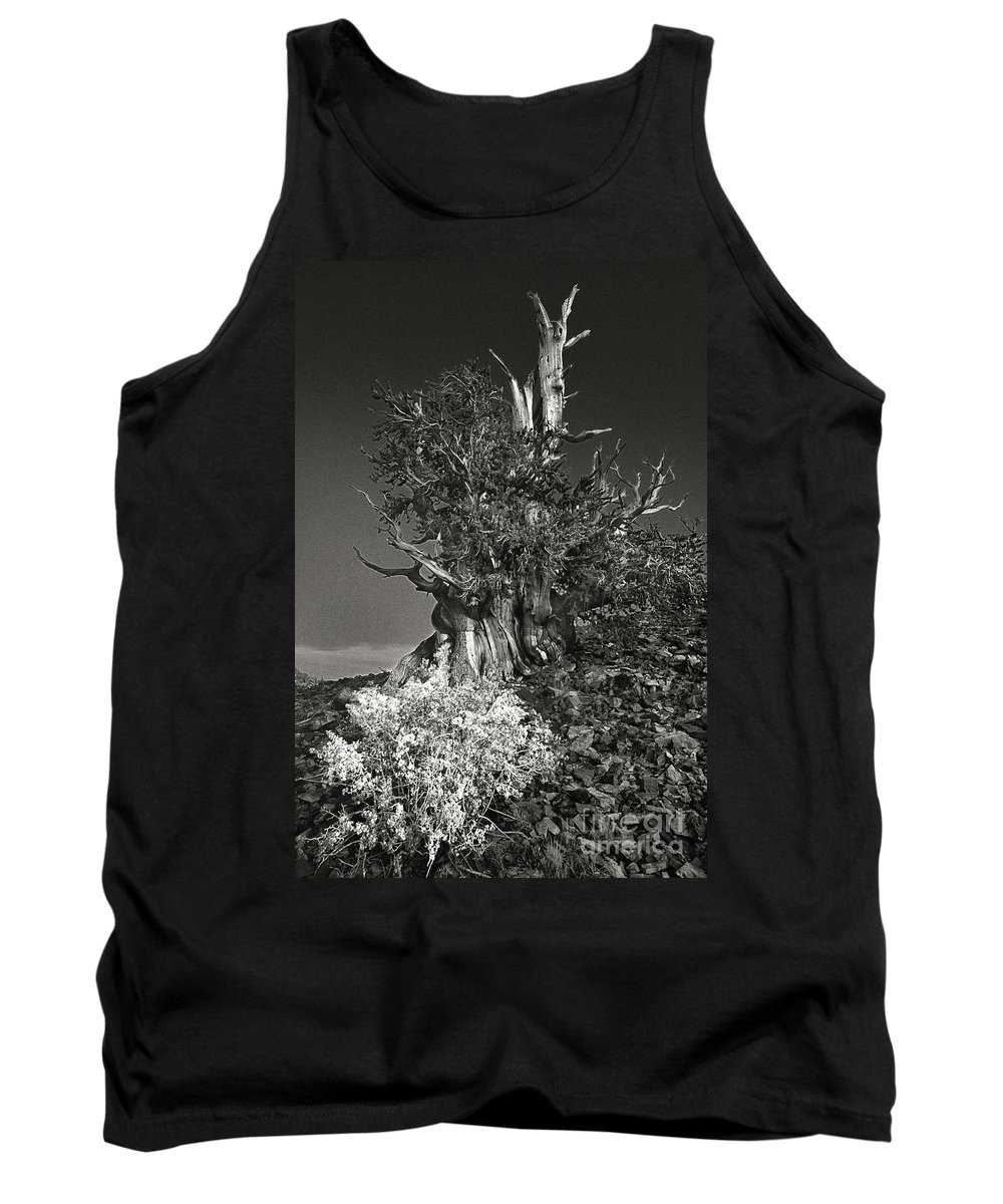 North America Tank Top featuring the photograph Bristlecone And Wildflowers In Black And White by Dave Welling