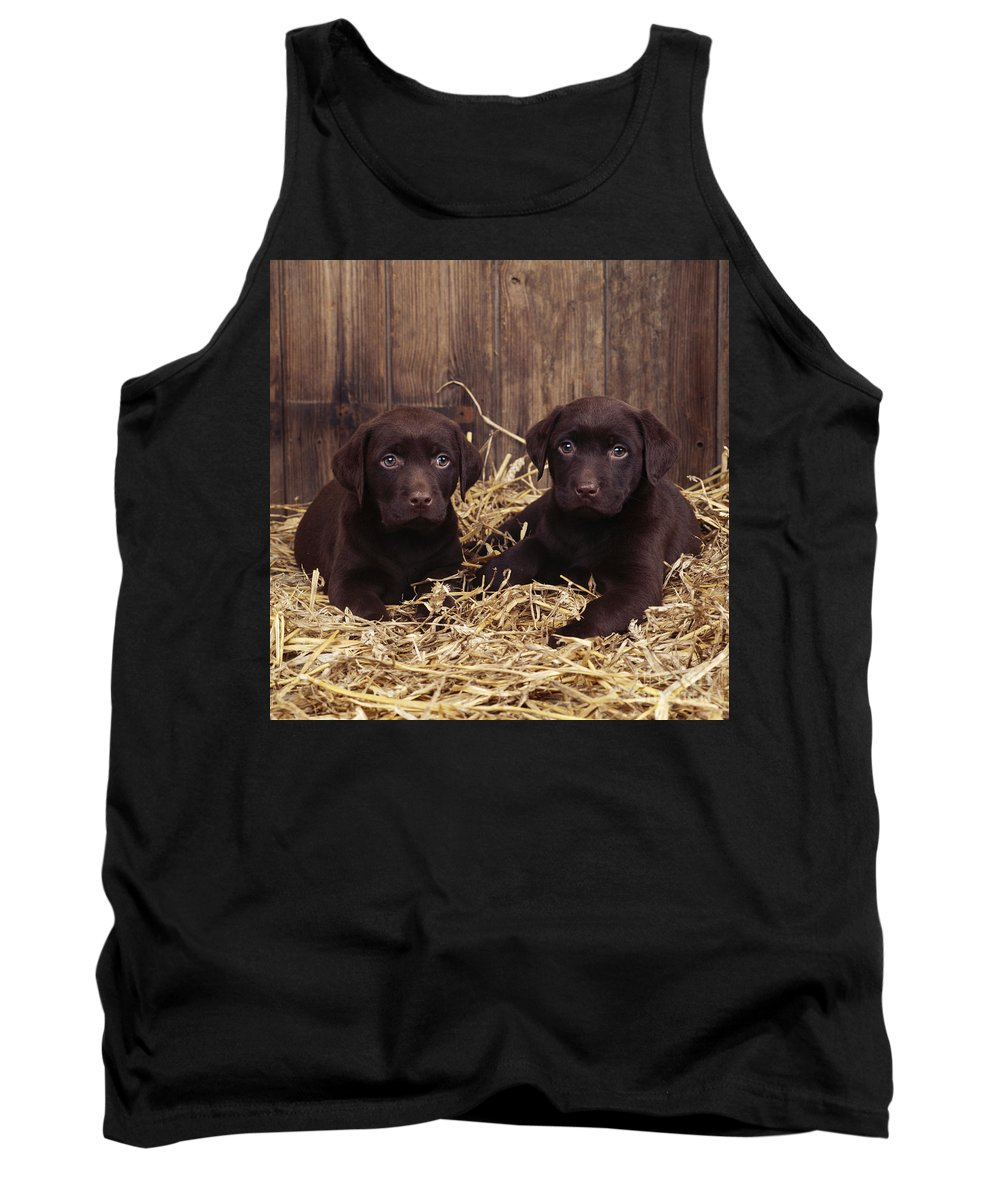 Chocolate Labrador Tank Top featuring the photograph Chocolate Labrador Puppies by John Daniels