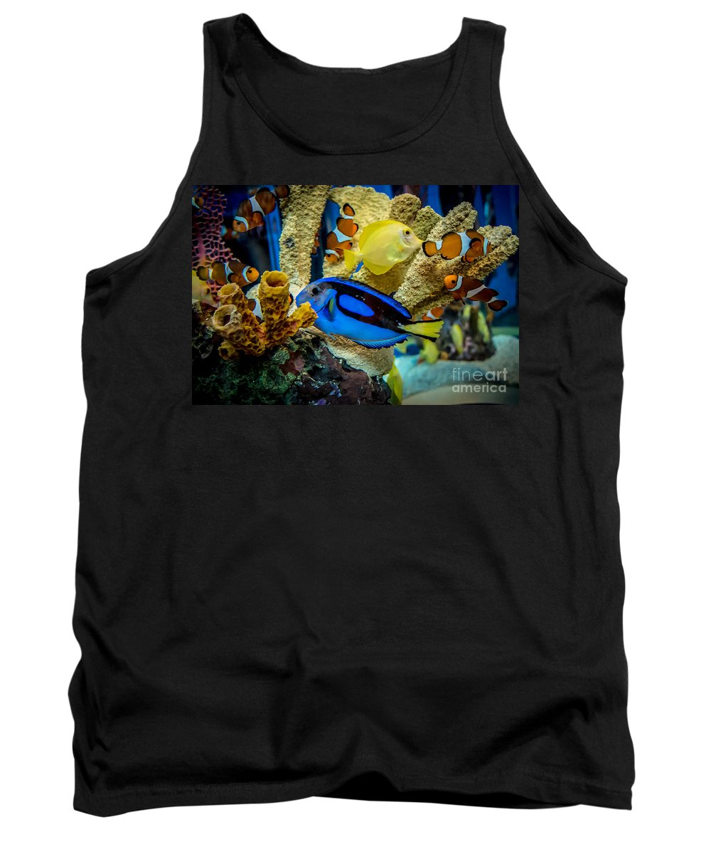 Salt Water Fish Tank Top featuring the photograph Colorful Fish by Cheryl Baxter
