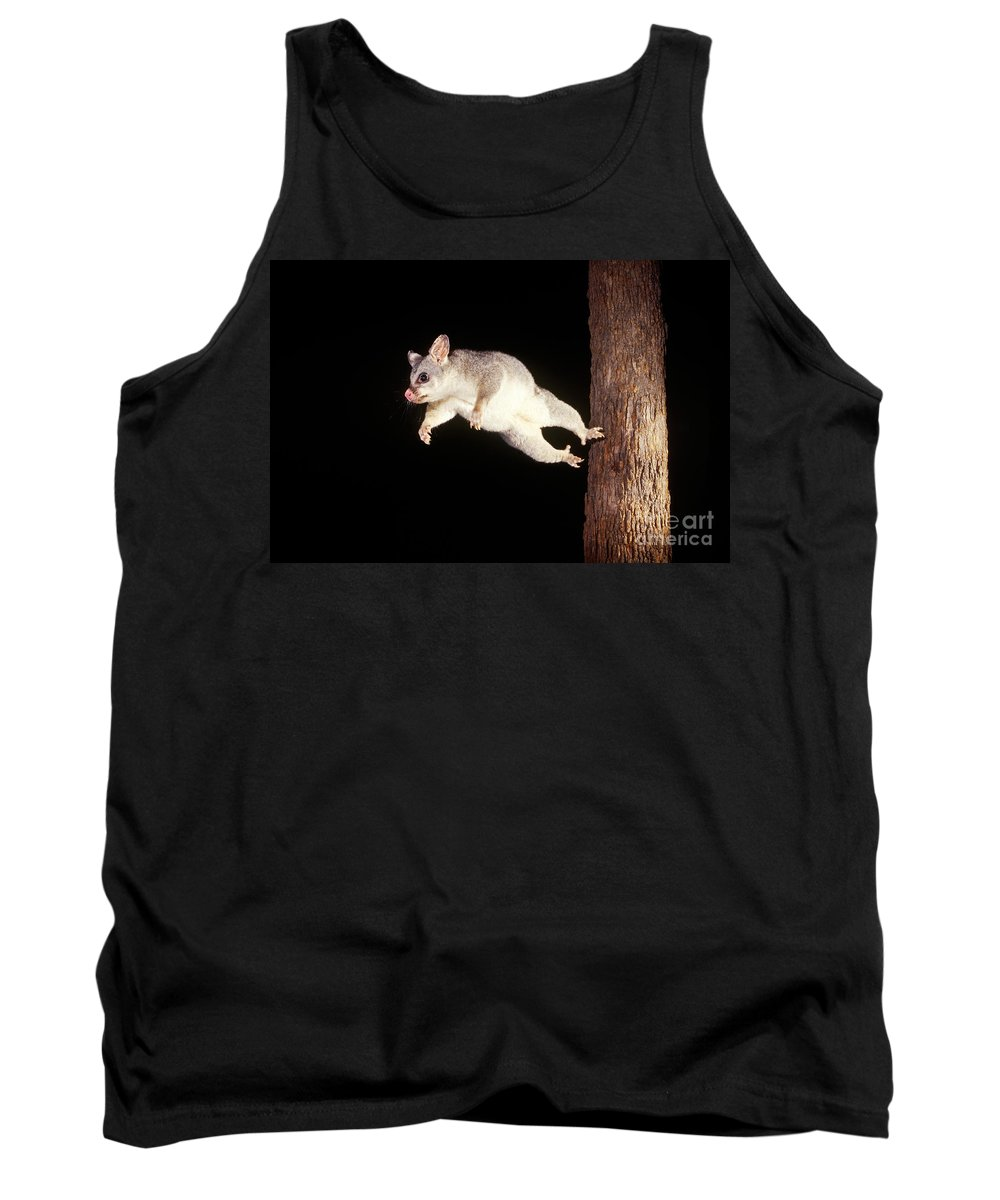 Animal Tank Top featuring the photograph Common Brush-tailed Possum by BG Thomson