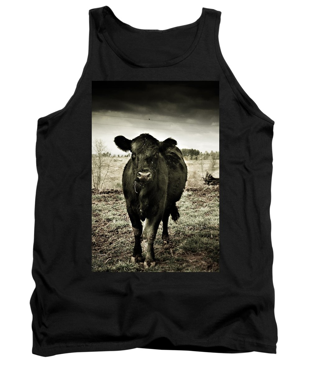 Animals Tank Top featuring the photograph Cow In The Winter Pasture by Gray Artus