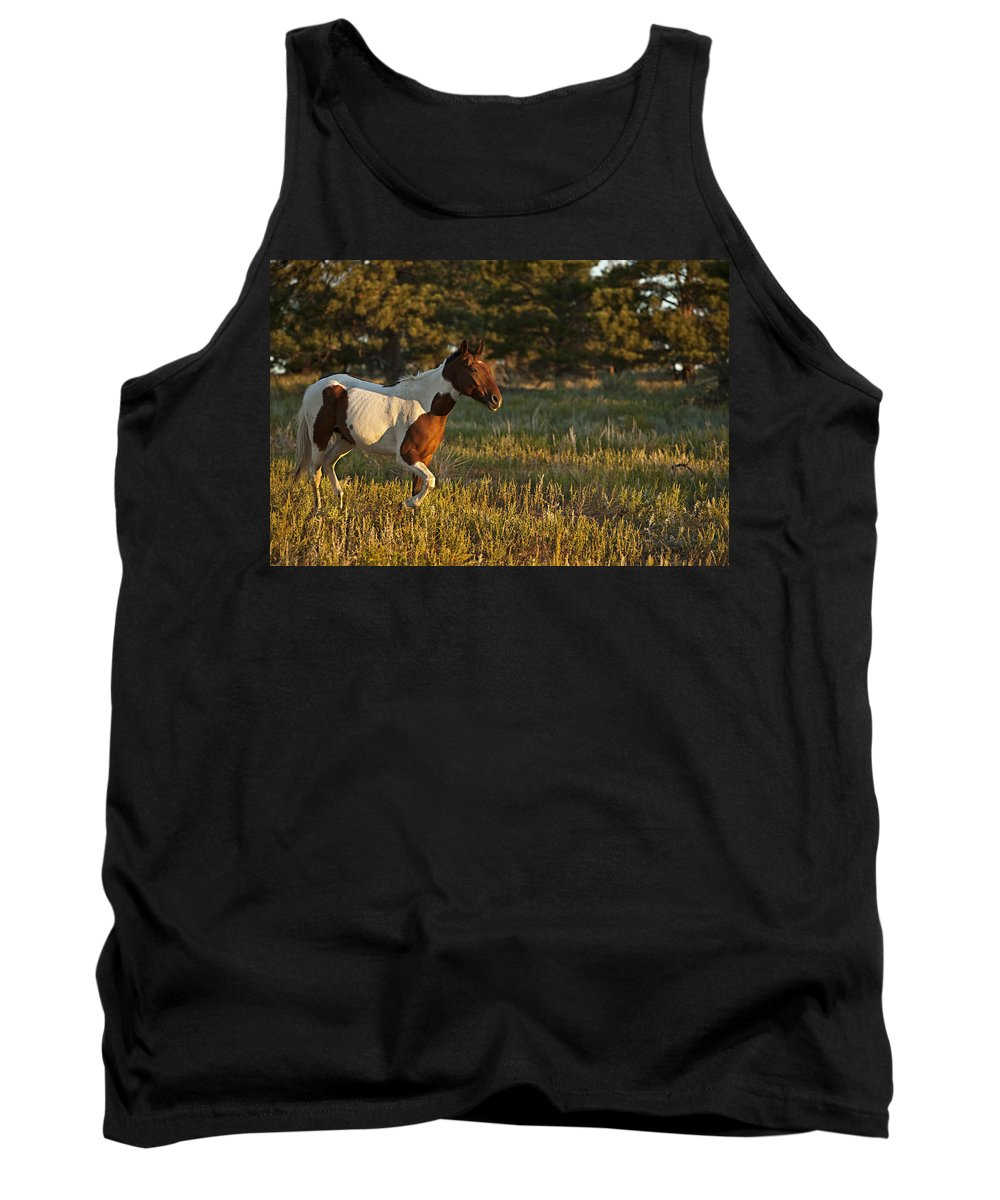Horse Tank Top featuring the photograph Crispy 2 by Jack Milchanowski