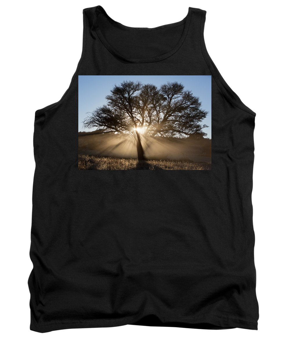 South Africa Tank Top featuring the photograph Desert Tree by Max Waugh