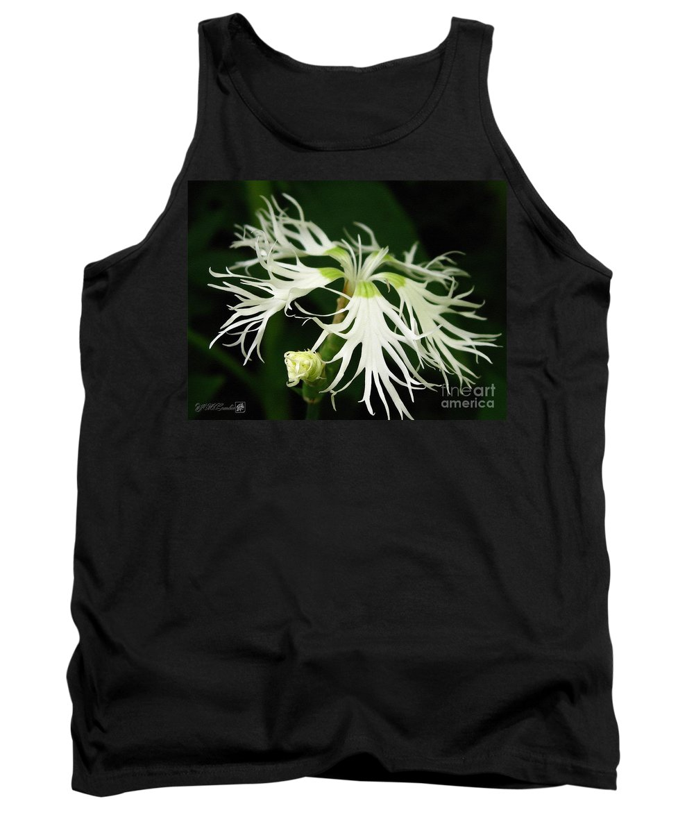 Dianthus Superbus Tank Top featuring the painting Dianthus Superbus - White by J McCombie