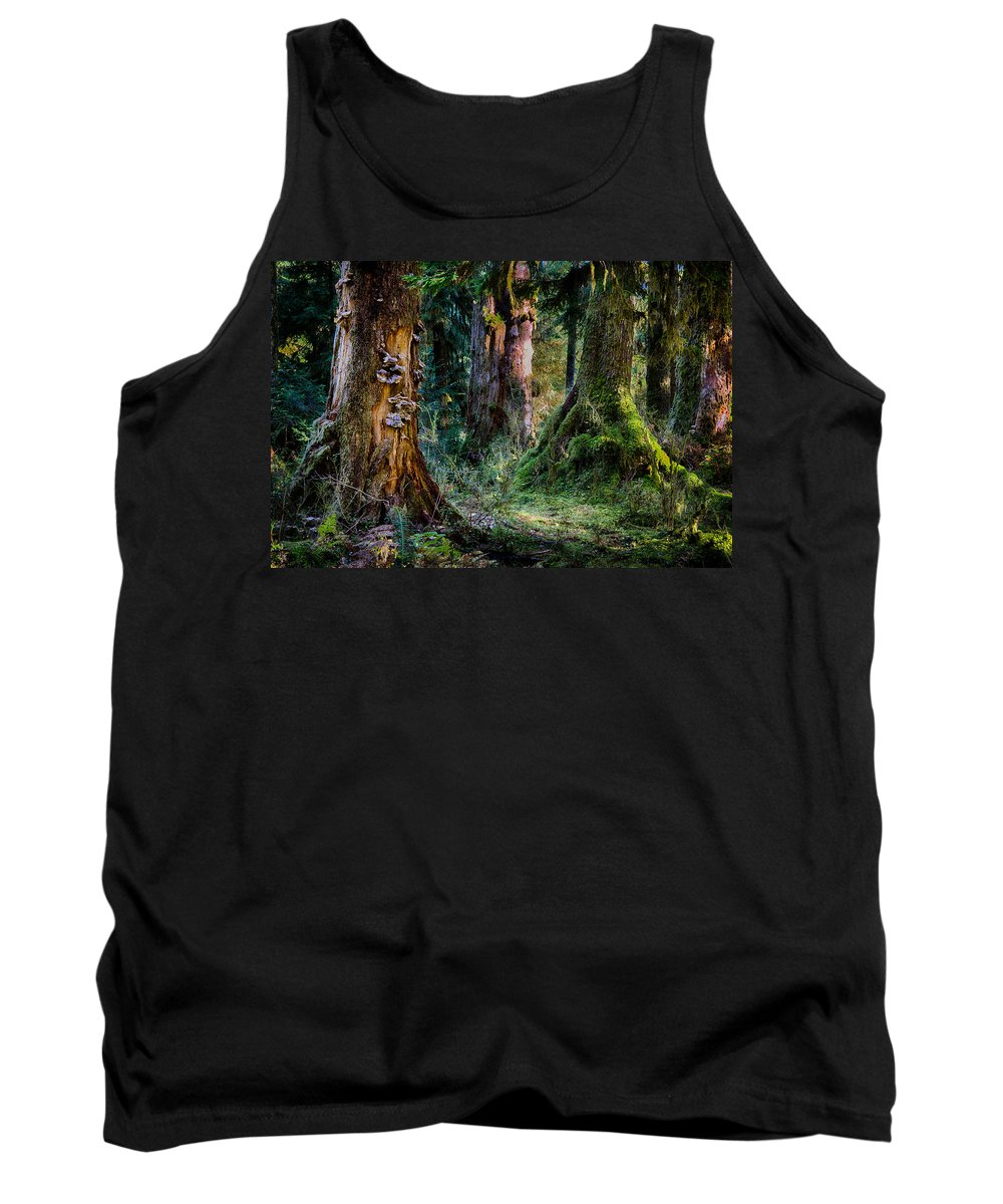Tree Tank Top featuring the photograph Enchanted Forest by Robert Woodward