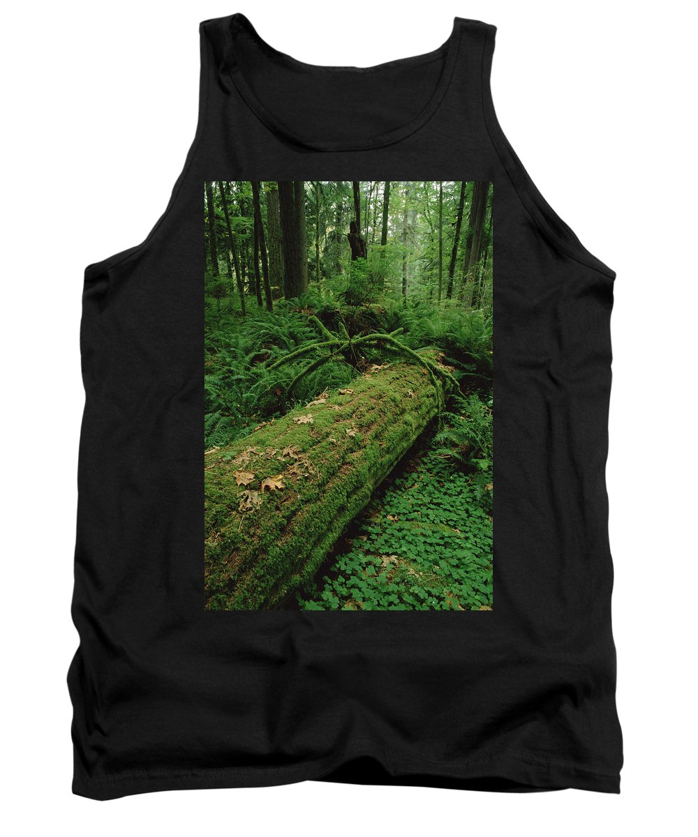 Feb0514 Tank Top featuring the photograph Fir Nurse Log In Rainforest Pacific by Gerry Ellis