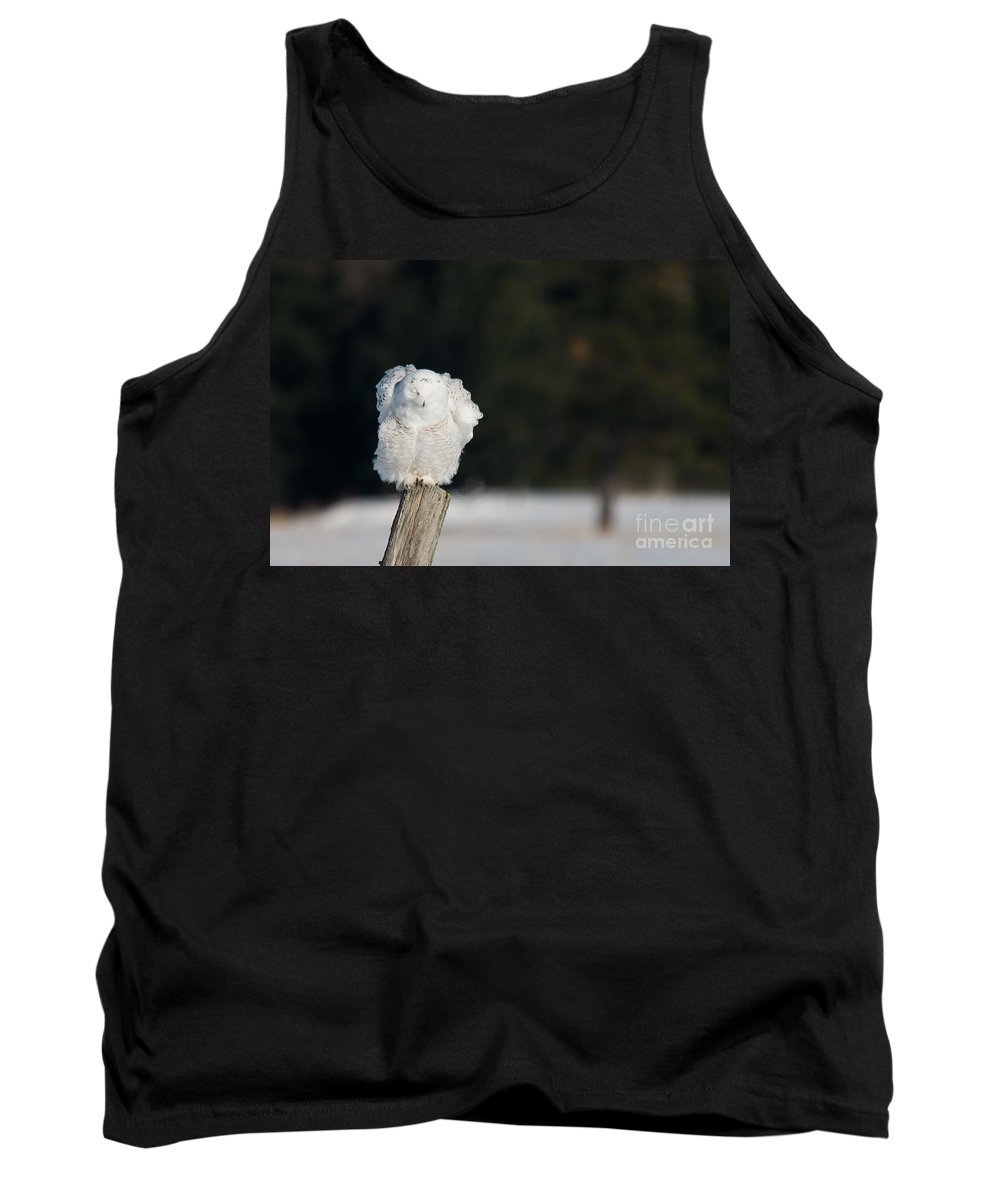Snowy Owl Tank Top featuring the photograph Fluffing Feathers by Cheryl Baxter
