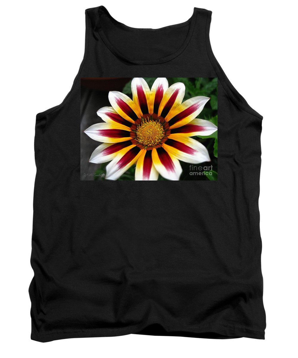 Mccombie Tank Top featuring the painting Gazania Named Big Kiss White Flame by J McCombie