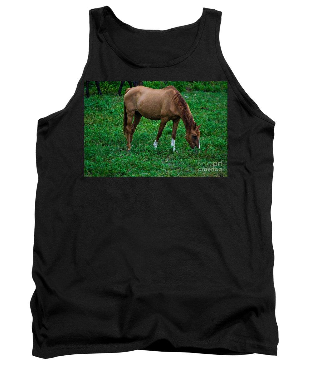 Graze Tank Top featuring the photograph Gazing Horse by Scott Hervieux