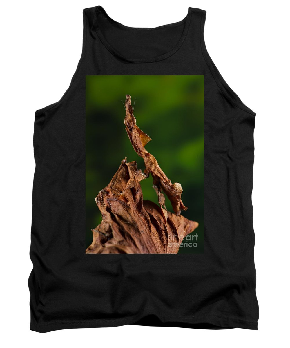Mantis Tank Top featuring the photograph Ghost Or Dead Leaf Mantis by Francesco Tomasinelli