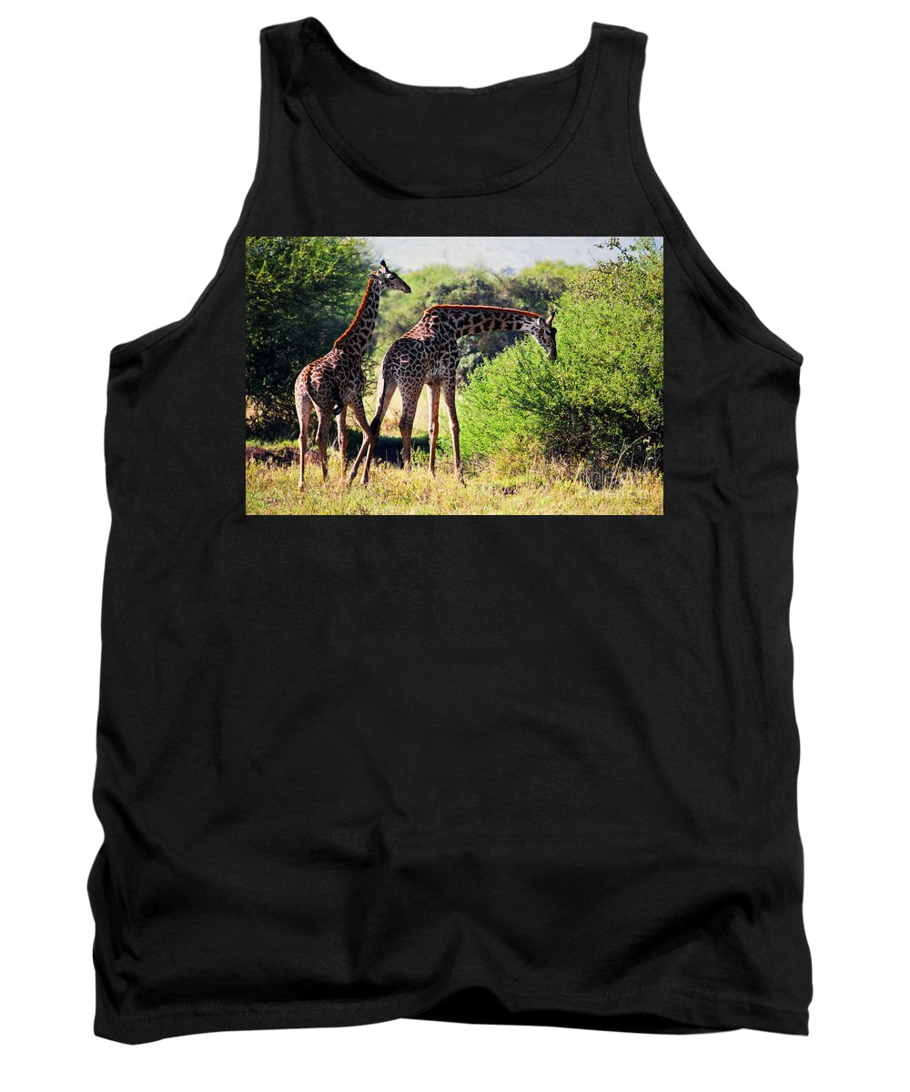 Giraffe Tank Top featuring the photograph Giraffes On Savanna Eating. Safari In Serengeti by Michal Bednarek