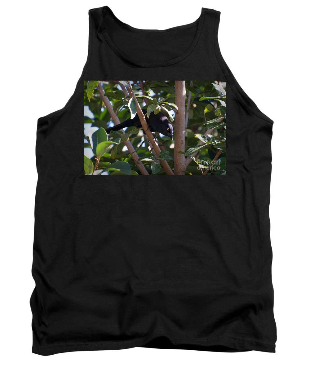 Common Tank Top featuring the photograph Grackle Stare by Photos By Cassandra