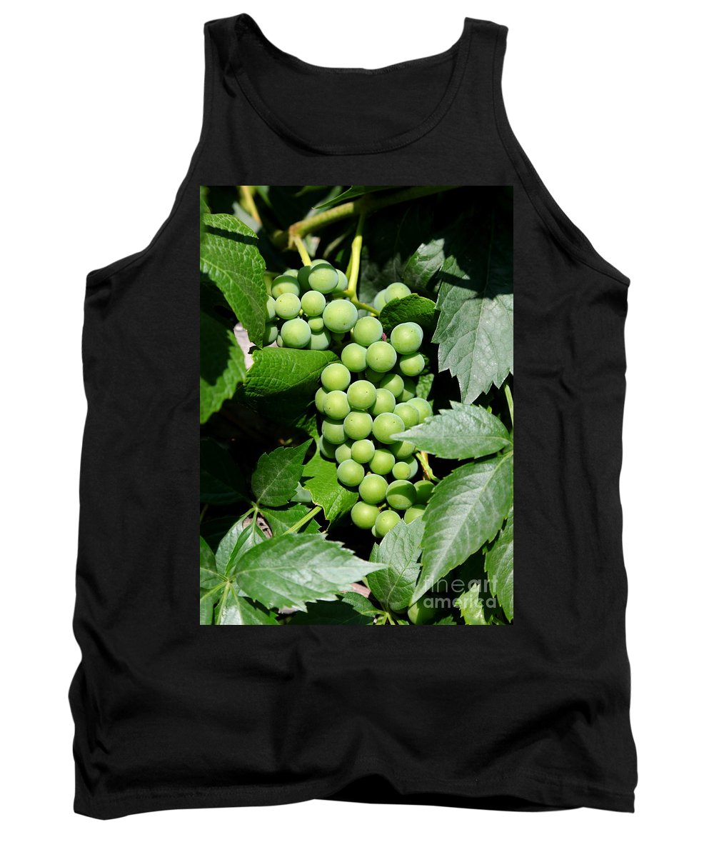 Grapes Tank Top featuring the photograph Grapes On The Vine by Carol Groenen