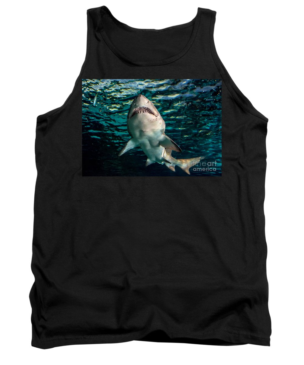 Shark Tank Top featuring the photograph Great White by Cheryl Baxter