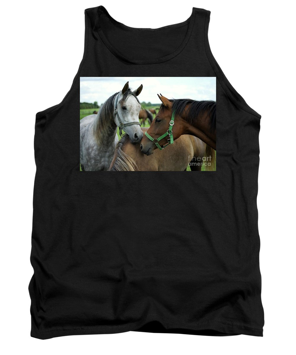 Horse Tank Top featuring the photograph Having A Chat by Angel Ciesniarska