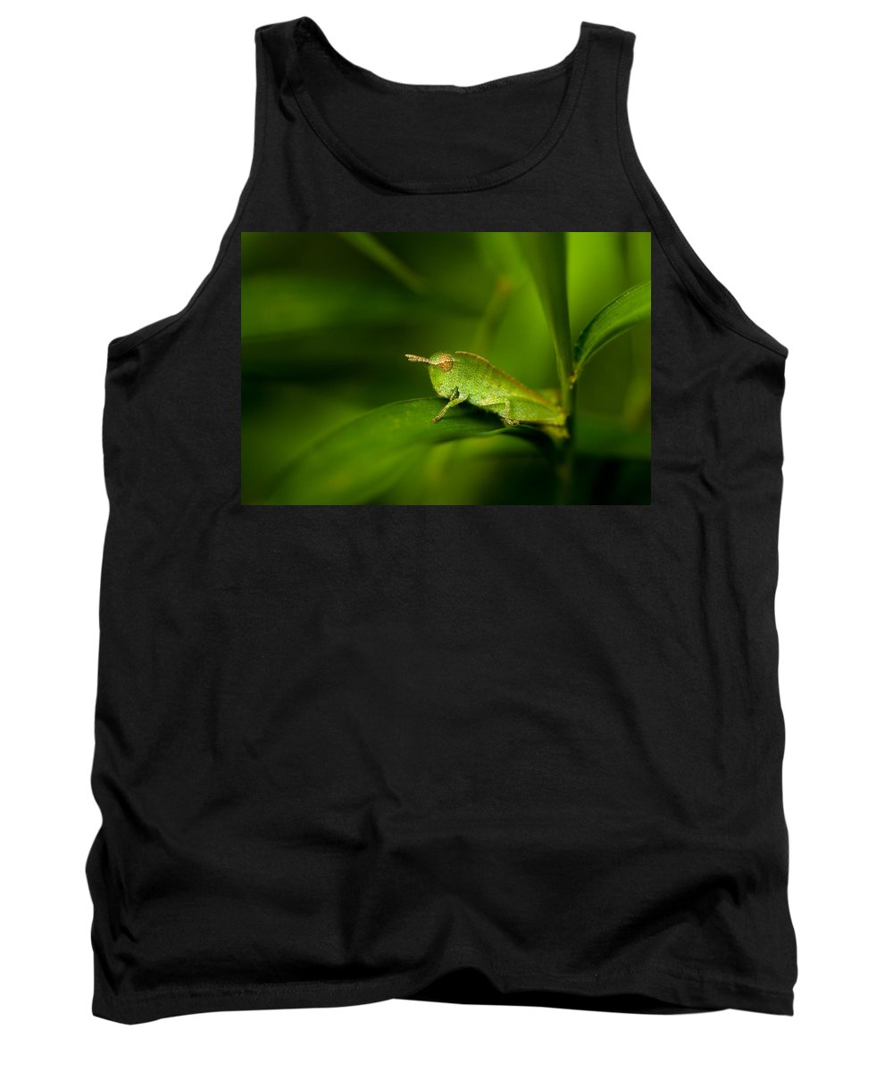 Grasshopper Tank Top featuring the photograph Hopper by Shane Holsclaw