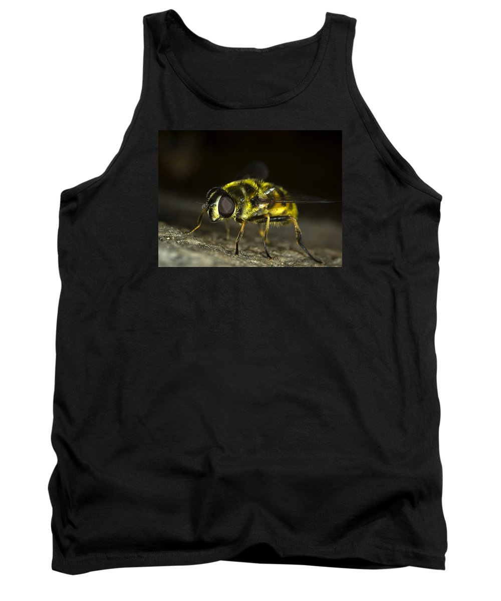 Hoverfly Tank Top featuring the photograph Hoverfly by FL collection