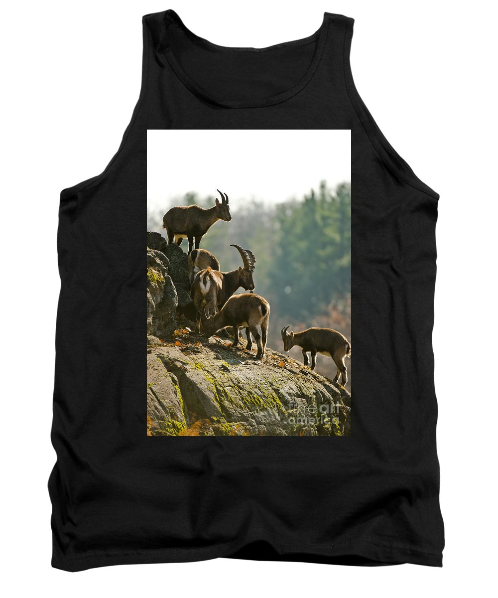 Ibex Tank Top featuring the photograph Ibex Pictures 176 by World Wildlife Photography