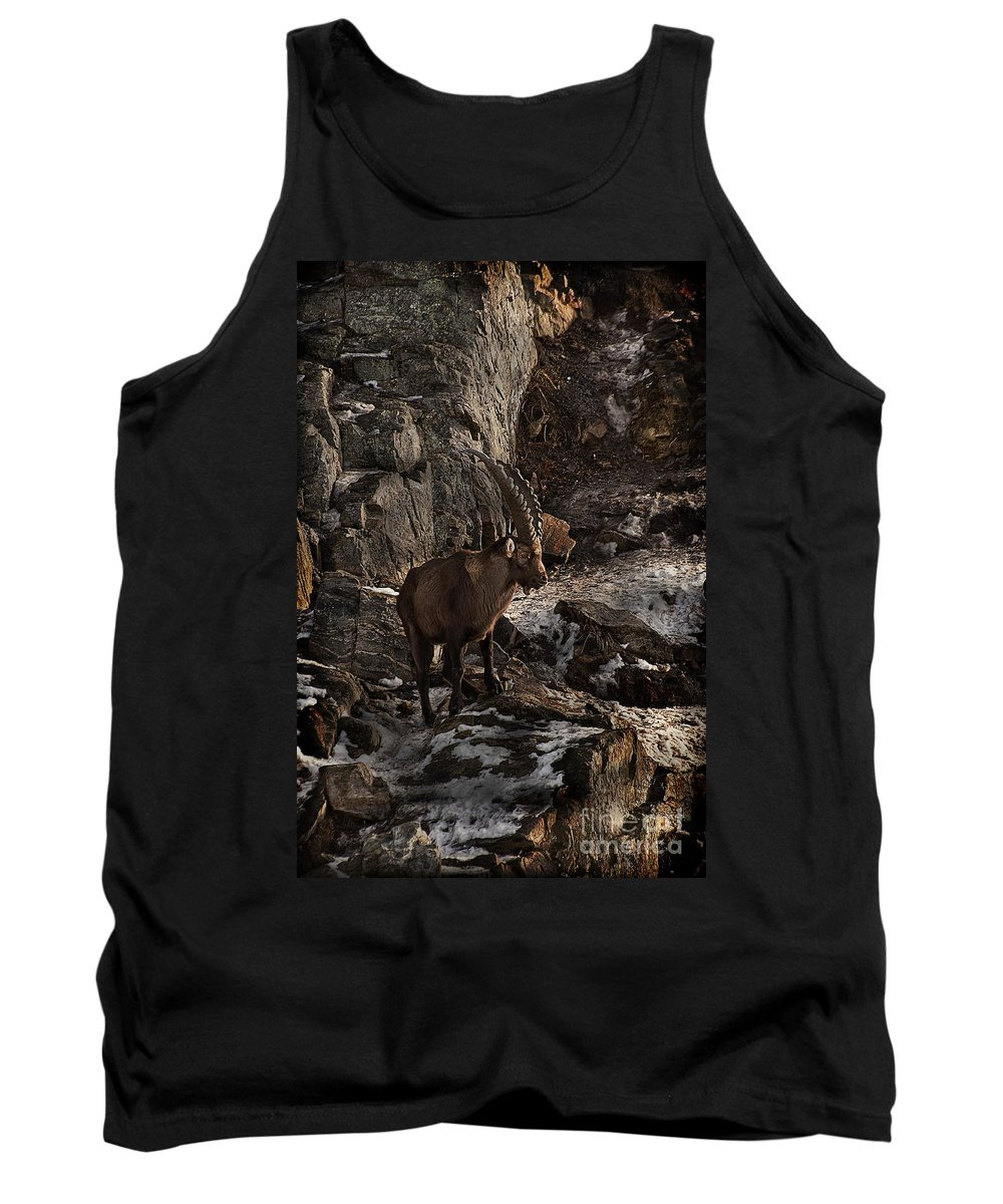 Ibex Tank Top featuring the photograph Ibex Pictures 86 by World Wildlife Photography