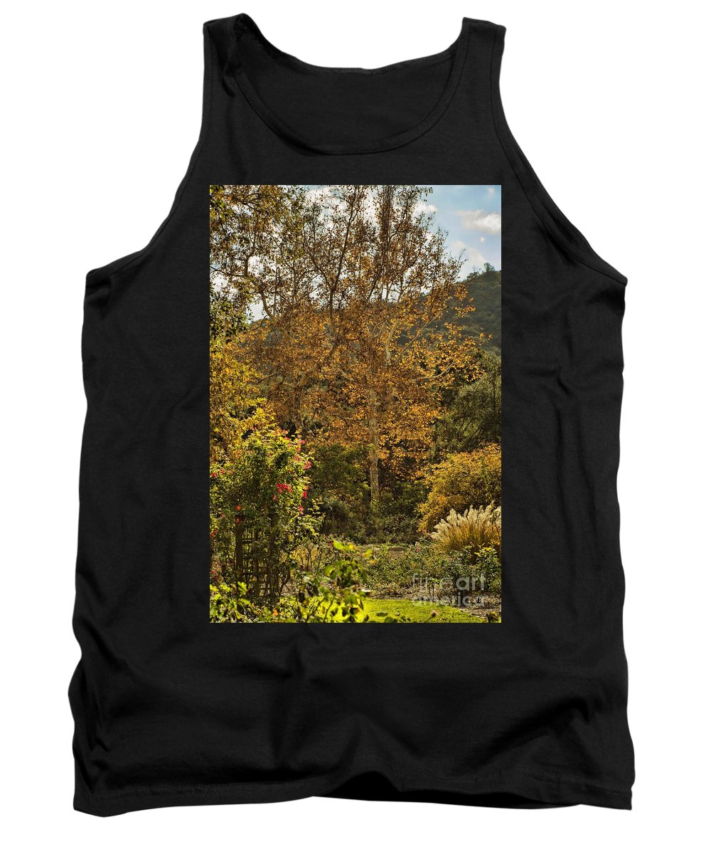 Trees Tank Top featuring the photograph Late Autumn Walk by Peggy Hughes
