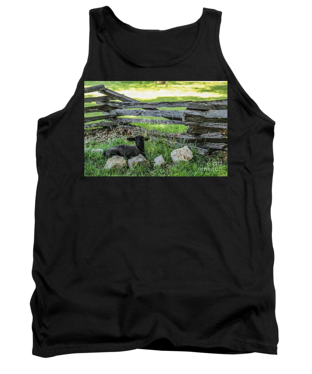 Lamb Tank Top featuring the photograph Little Lamb by Lynn Sprowl