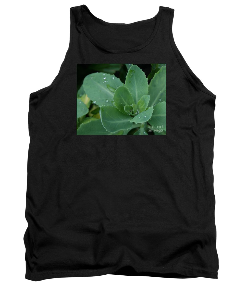 Alpine Tank Top featuring the photograph Morning Rain by Dawn Downour