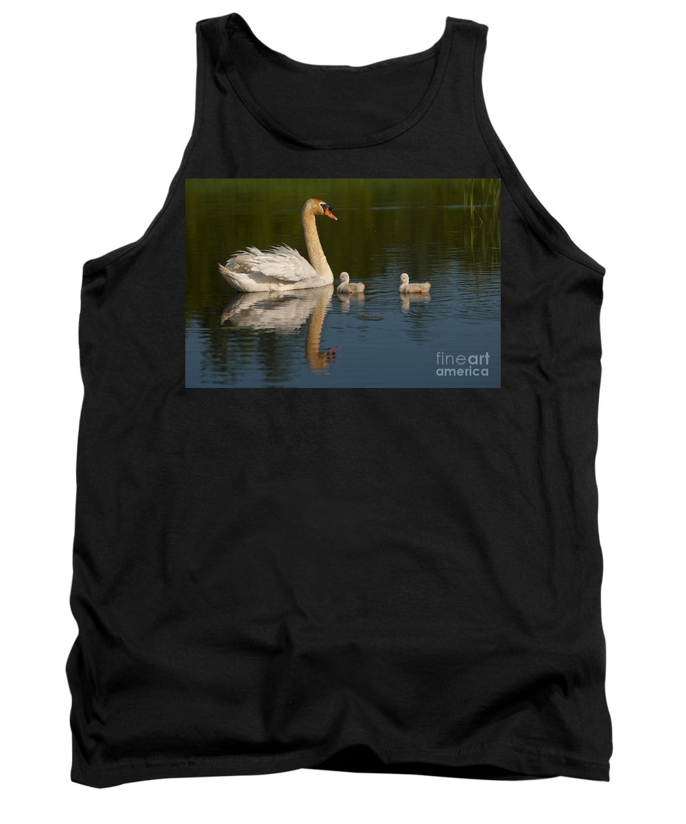 Mute Swan Tank Top featuring the photograph Mute Swan Pictures 244 by World Wildlife Photography