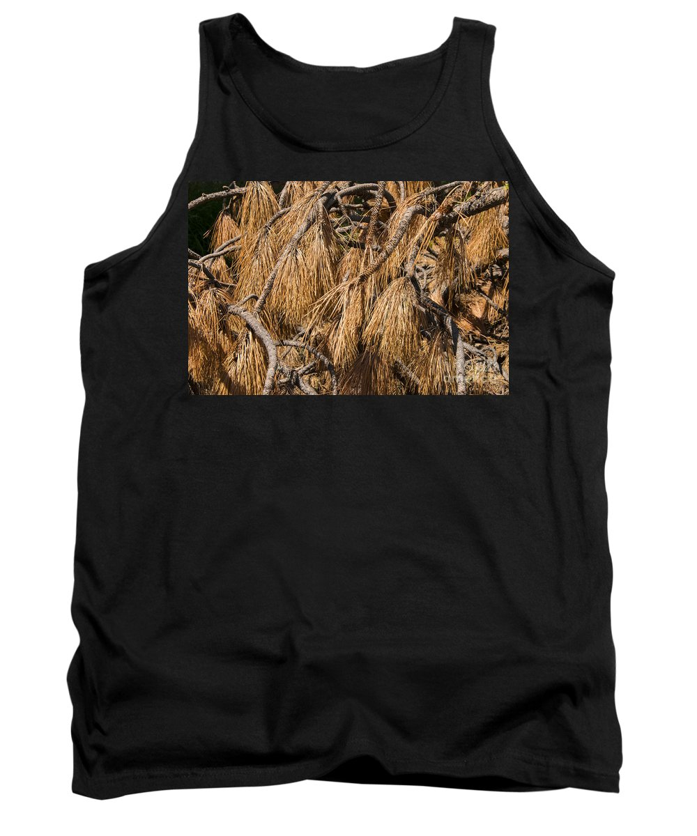 Fir Broom Brooms Branch Branches Needle Needles Yosemite National Park California Odds And Ends Tank Top featuring the photograph Nature's Brooms by Bob Phillips