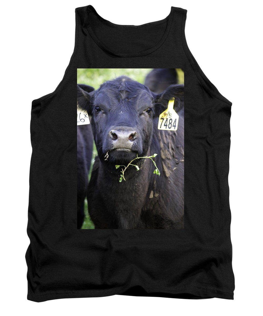 Cows Tank Top featuring the photograph Number 7484 by Debra Bowers