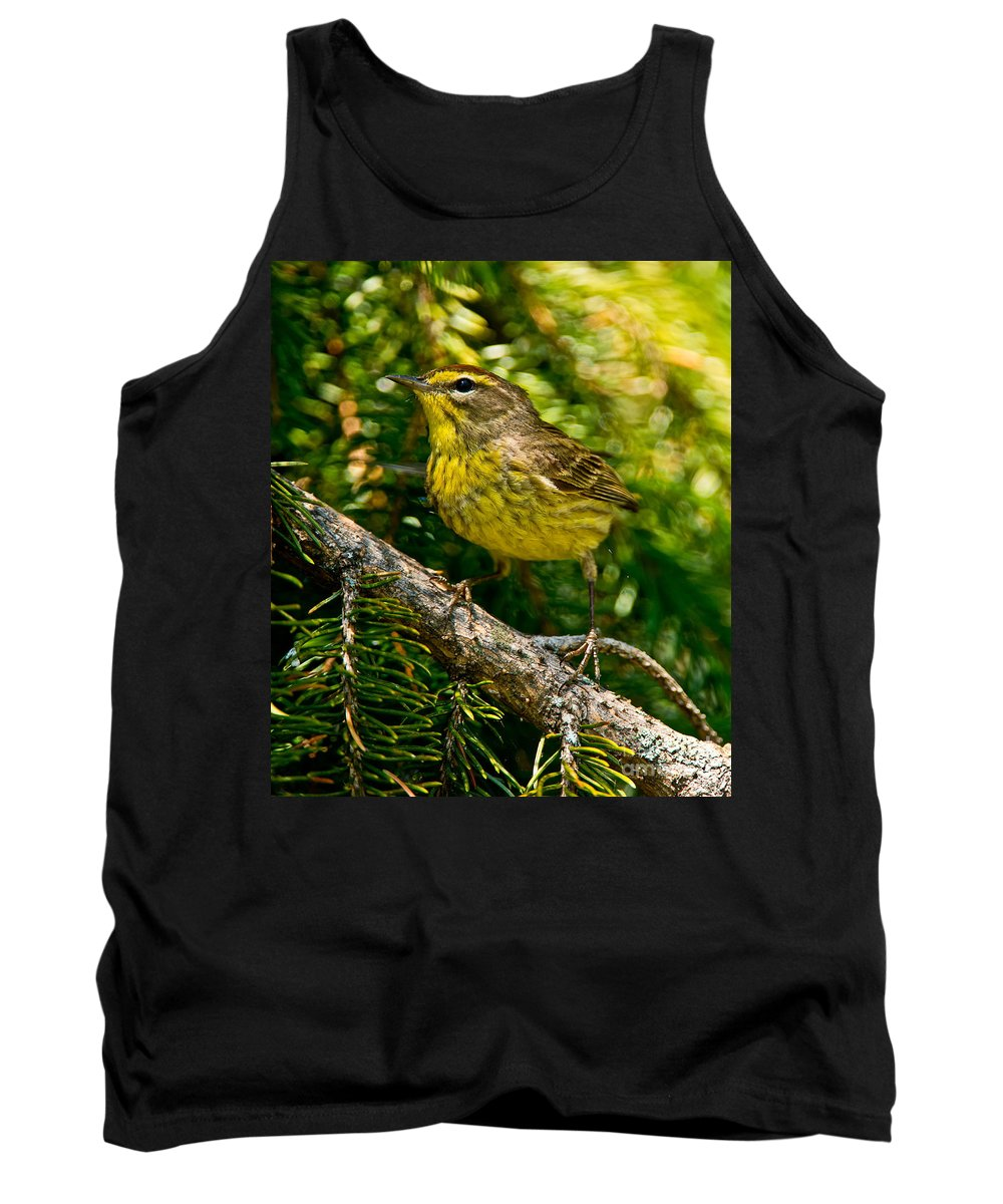 Palm Warbler Tank Top featuring the photograph Palm Warbler Pictures 38 by World Wildlife Photography