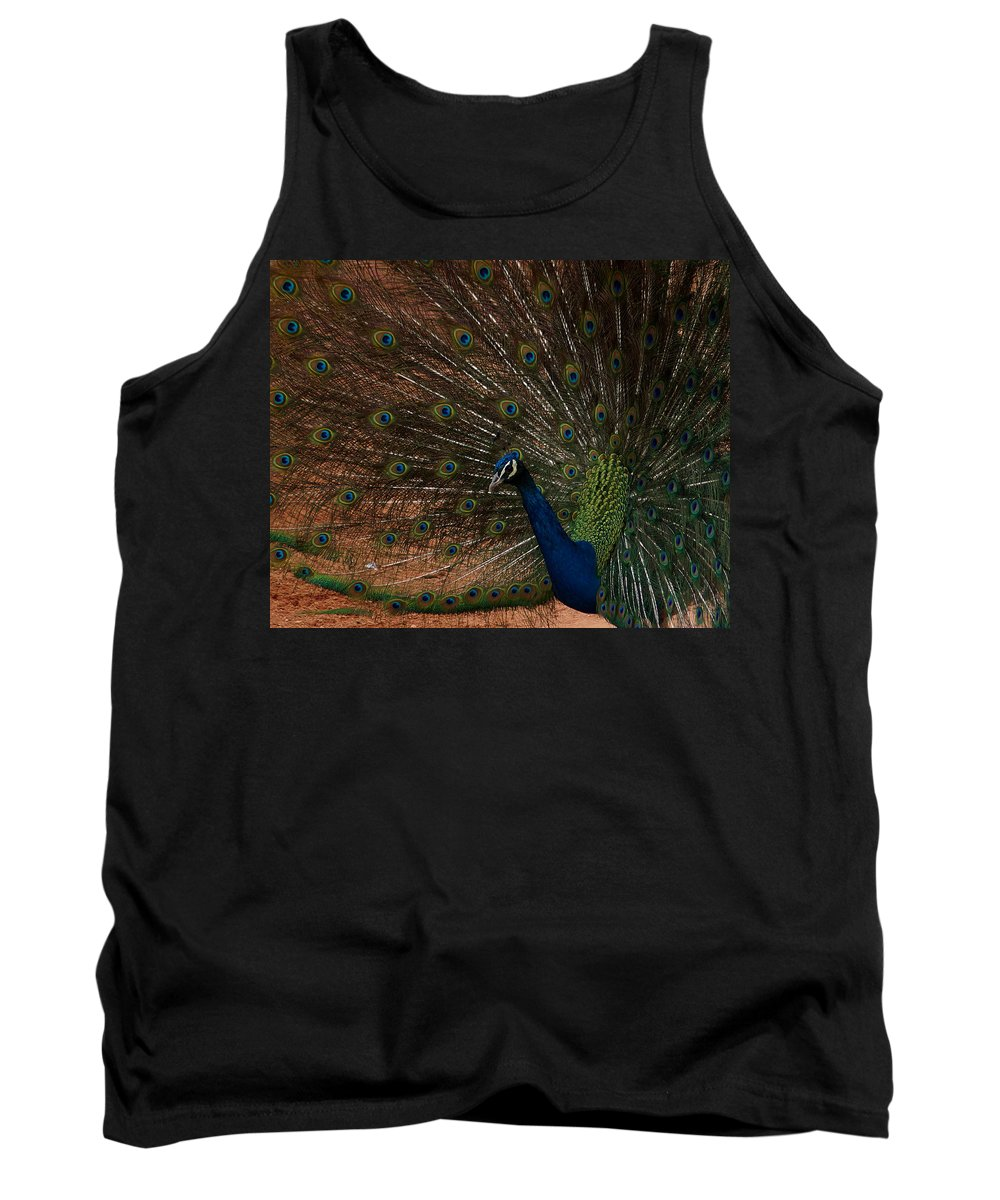 Peacock Tank Top featuring the photograph Peacock Show Off by Ernie Echols