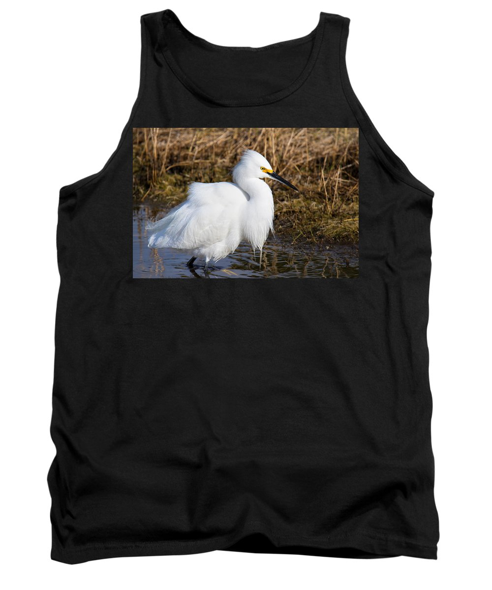 Bird Tank Top featuring the photograph Pretty In White by John Absher