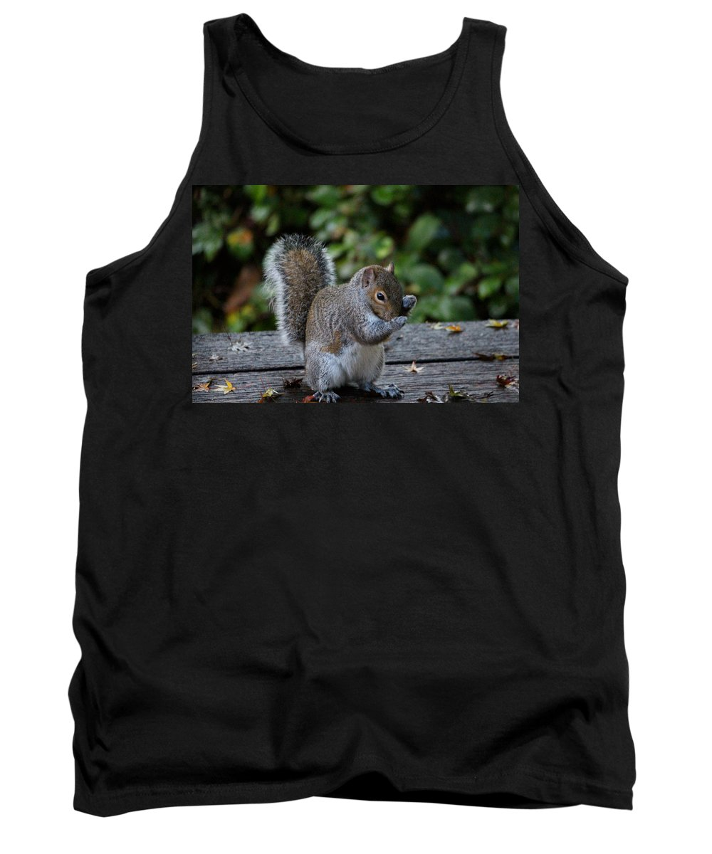 Mammals Tank Top featuring the photograph Put Up Your Dukes by Kym Backland