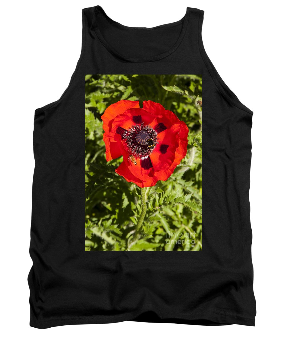 Botanical Gardens Christchurch New Zealand Red Poppy Poppies Bee Bees Flower Flowers Bloom Blooms Tank Top featuring the photograph Red Poppy And Bee by Bob Phillips