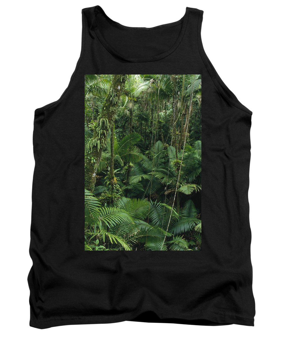 Feb0514 Tank Top featuring the photograph Sierra Palm Trees El Yunque Puerto Rico by Gerry Ellis