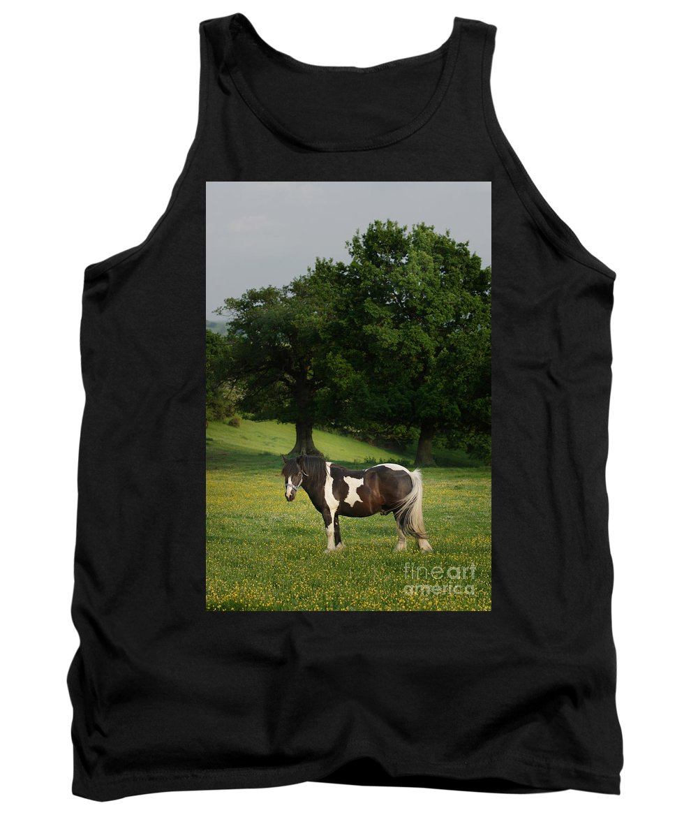 Horse Tank Top featuring the photograph The Sunny Meadow by Angel Ciesniarska