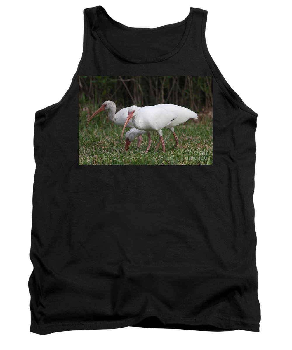 Ibis Tank Top featuring the photograph Three Ibis Together by Christiane Schulze Art And Photography