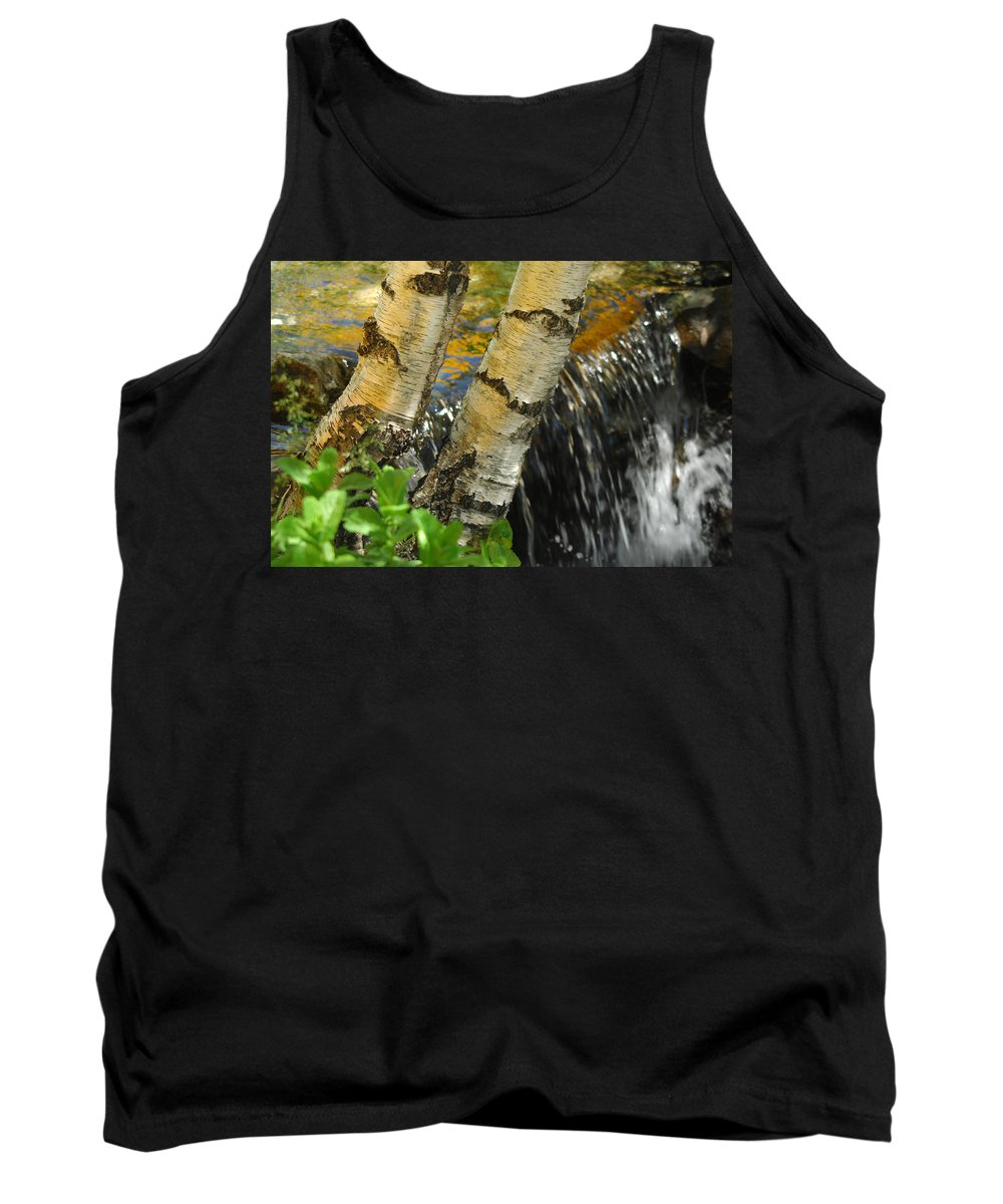 Birch Trees Tank Top featuring the photograph Totally Birching by Donna Blackhall