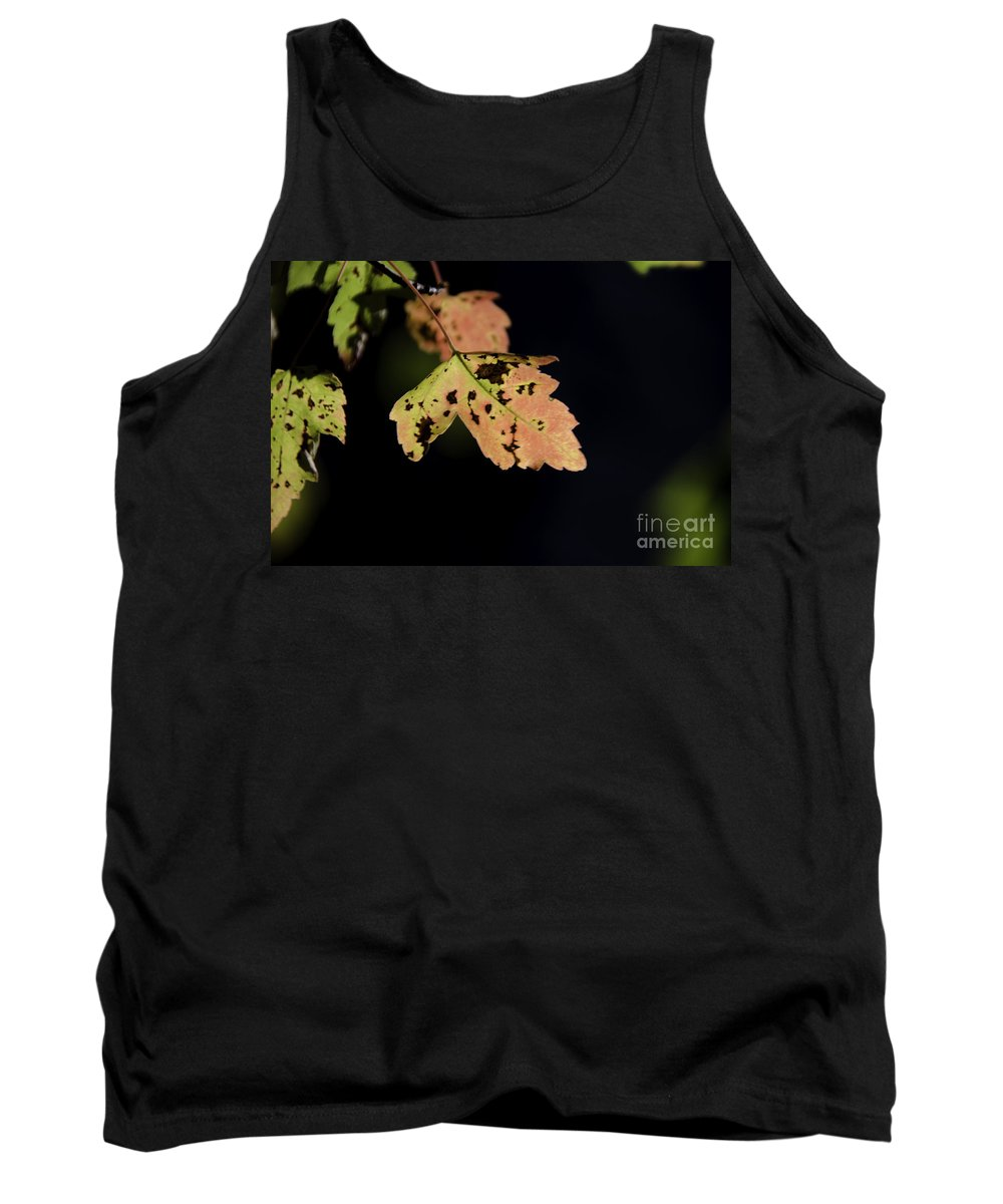 Maple Leaf Tank Top featuring the photograph Translucent Maple Leaf by Dale Powell