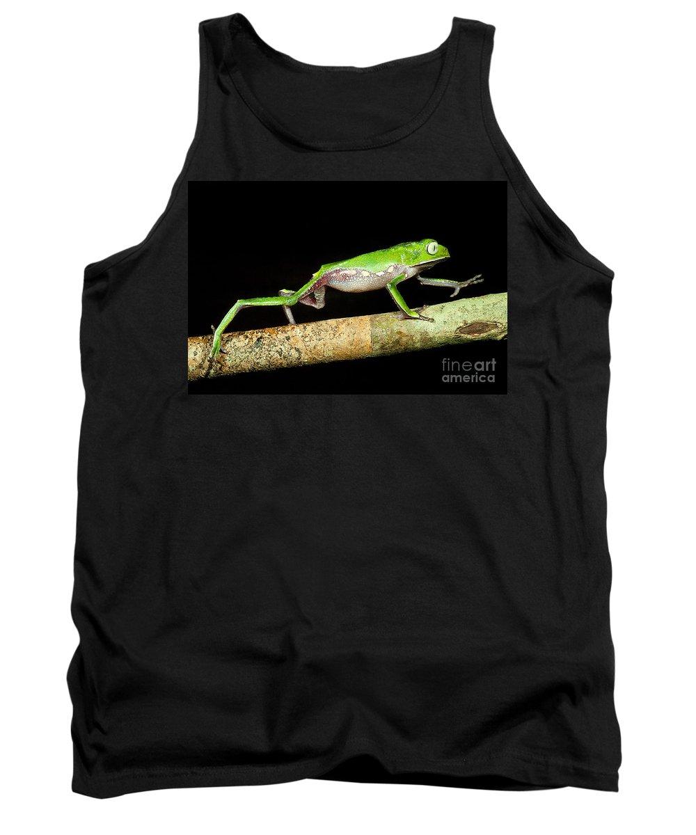 Vaillanti's Monkey Frog Tank Top featuring the photograph Vaillantis Monkey Frog by Dante Fenolio