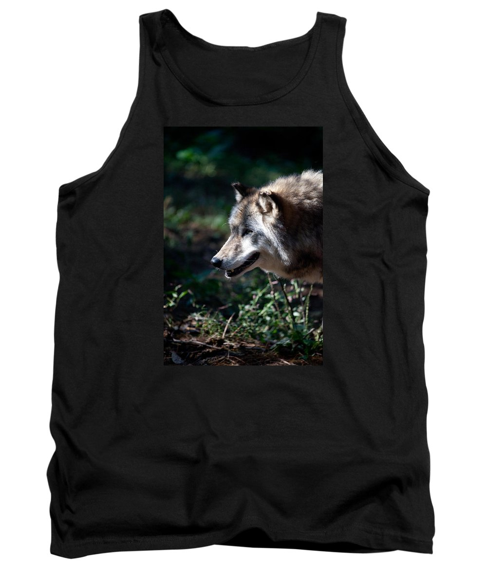 Wolf Tank Top featuring the photograph Wandering Wolf by Karol Livote