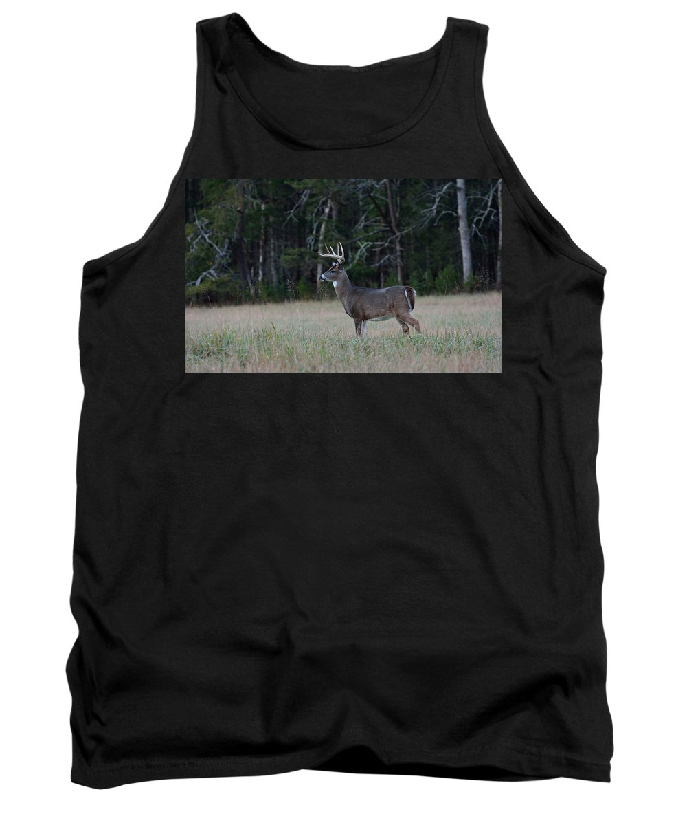 Cades Cove Tank Top featuring the photograph Whitetail Buck 1 by Todd Hostetter