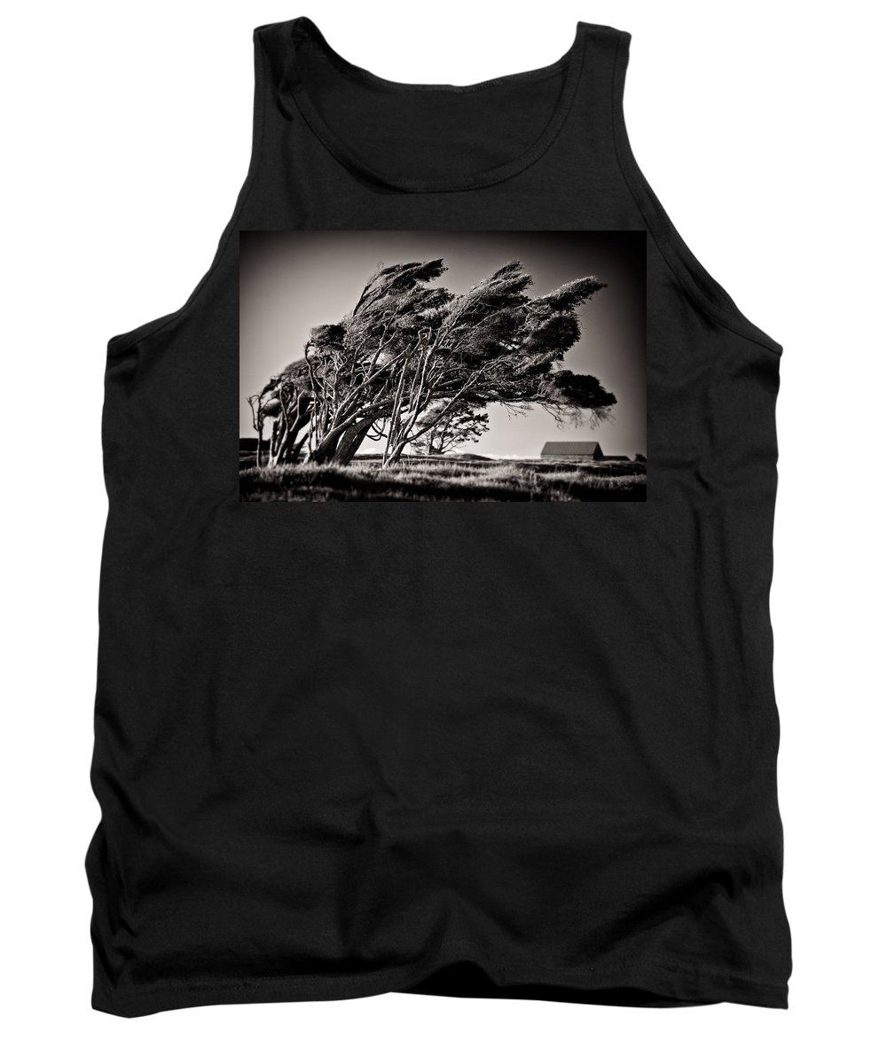 Windswept Trees Tank Top featuring the photograph Windswept by Dave Bowman